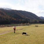 Edelweisshütte, Schneeberg