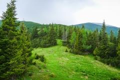 Am Ochsenboden lichtet sich der Wald.